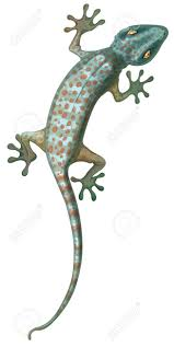 illustration of the tokay gecko royalty free cliparts vectors