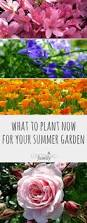 what to plant now for your summer garden growing family