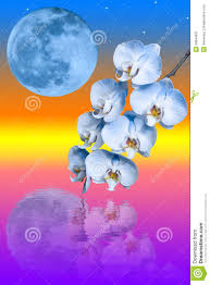 Blue Orchid Flower - branch of the blue orchid flower and big blue moon royalty free