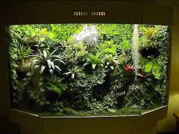 70 best vivarium images on pinterest vivarium amphibians and