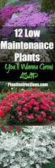 10 easy care plants for best 25 low maintenance plants ideas on pinterest indoor house