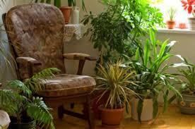 How To Arrange Indoor Plants by Decorating With Indoor Plants U2013 Tips On Arranging St Petersburg