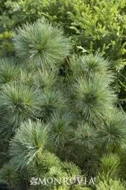 55 best holiday garden decor images on pinterest plant catalogs