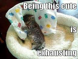 Cute Kittens Meme - being this cute is exhausting kitten memes and comics