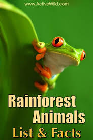 eyed tree frog clipart rainforest 3844647