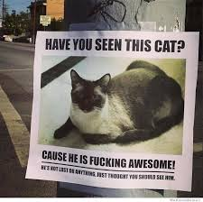 Missing Cat Meme - have you seen this cat humor pinterest cat animal and humor