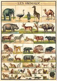 cavallini poster cavallini co animal chart decorative decoupage