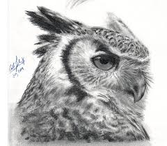 owly owl 2 by calliefink on deviantart