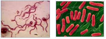 Diseases Caused By Protozoa In Plants - dealing with harmful micro organisms learn biology class 8