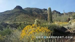 anthem az real estate search u0026 sell anthem homes the arizona