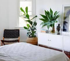 une plante dans une chambre c est dangereux