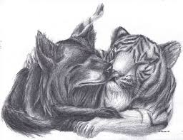 tiger and wolf by mathas on deviantart