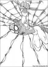 spiderman sharp gaze coloring picture kids