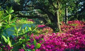 Wilmington Nc Botanical Gardens by Gardens On The Coast