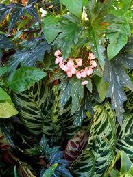 plants i love robin powell page 2