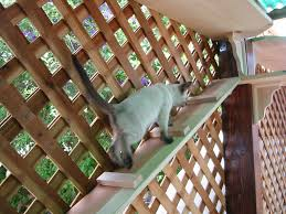 Ideas For Enclosing A Deck by Enclosing A Porch For Cats