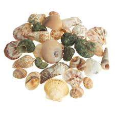 assorted seashells assorted seashells vase fillers arts and crafts www partymill