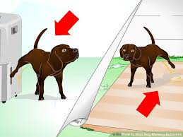 Dog Peed On Bed How To Stop Dog Marking Behaviors With Pictures Wikihow