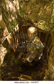 Bow Ground Blind Bow Hunting Deer Stock Photos U0026 Bow Hunting Deer Stock Images Alamy