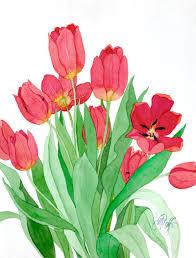 tulip bulbs fresh off the drawing board