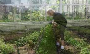 video how to plant a vegetable garden martha stewart