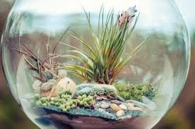 how to start a terrarium in 5 easy steps mnn mother nature network