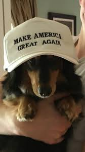 Know Your Meme Dog - dog make america great again know your meme