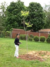 26 new trees jeffersontown elementary outdoor classroom
