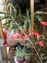 planning that happy new gardening year forest garden