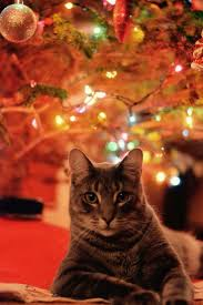 Cat Climbing Christmas Tree Video 433 Best Santa Claws Images On Pinterest Christmas Animals
