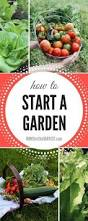 seeds to plant in may for a beautiful summer harvest zones 3