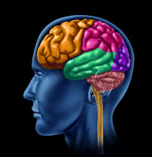Anatomy And Physiology Of The Brain Physiology Of Addiction U0026 The Developing Brain With Dr Rut