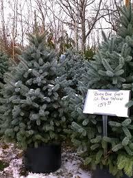 diy plant your tree in the garden gardenista