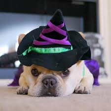 some of our favorite howl o ween costumes too cute animal planet