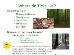 Ticks In Backyard Lyme Disease Is The Number One Infectiouse Disease Reported In