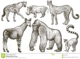 halo warthog drawing african animals hyena okapi cheetah gorilla warthog lemur