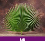 where to buy palms for palm sunday palm for palm sunday