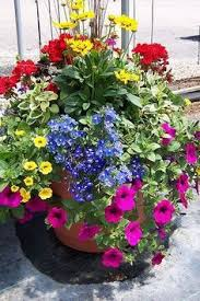 container garden garden ideas pinterest gardens container