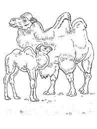 coloring page camels in the desert