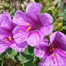 Fragrant Plants For Pots - 5 plants for utah porch pots western garden centers
