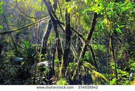 biodiversity stock images royalty free images u0026 vectors