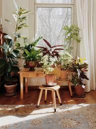 indoors garden the planthunter janneke luursema s indoor garden oasis