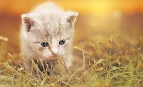 free photo baby animal cat fur kitty cute feline kitten max pixel