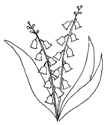 Muguet Coloriage Awesome Coloriage Brin De Muguet Primavera  Best