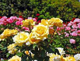 pictures of seasonal spring flowers lovetoknow