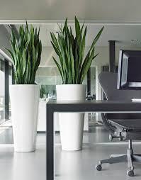 modern plant pots planters pots u0026 planters glastres greens ahmednagar