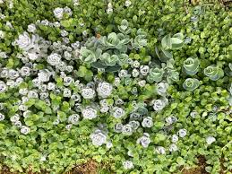 native plants portland oregon garden happenings may