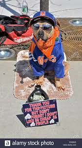 Queen S Dog Coffee The Dog Collecting Money Outside Of Citi Field In Flushing