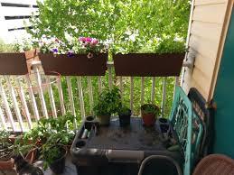 2 week progress update on my balcony garden album on imgur