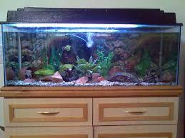 Aquarium Decorations Cheap Member Spotlight Sabi